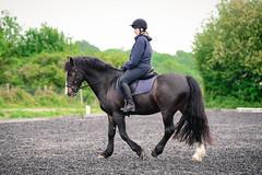 DSC_6215_copy (Justin Akehurst Photography) Tags: nikond750 nikon7020028e equestrian horse lesson brendan