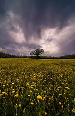 Nature (Vagelis Pikoulas) Tags: nature spring april 2018 landscape sky skyscape clouds cloudy cloud cloudscape flowers flower tree dramatic greece europe village