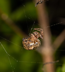 752A2910 (Trefor2011) Tags: norfolk stbenets macro spider horning england unitedkingdom gb