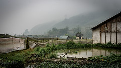 Sapa-Hmong Village in the fog. (Gilama Mill) Tags: fields paddy rain fog sapa asia landscapes people travel vietnam