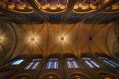 looking up (nzfisher) Tags: notredamedeparis notredame paris france arch vault ceiling architecture gothic building church stainedglass 24mm canon orange iledelacité