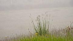 In the Mist (bimbler2009) Tags: fujifilms9900w grass flora fauna field mist landscape flower