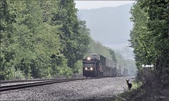 Pittsburgh Line: Laurel Highlands (Images by A.J.) Tags: train railroad railway norfolk southern deer pittsburgh pennsylvania laurel highlands transportation greensburg westmoreland