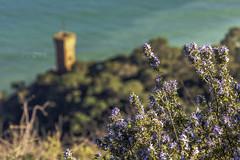 Nature Over the Castle - ver. 1 (Ragnarøkkr) Tags: ifttt 500px nikon d7200 tamron18400 tranquil scene tree hillside sea plants flowers nature