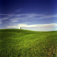 Val D'Orcia_7 (| zeno | chase the light) Tags: valdorcia cipresso collina verde blu cielo hill sky hasselblad 50mm ektar tetenal fujixpro400