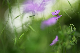 Deep in the Meadow