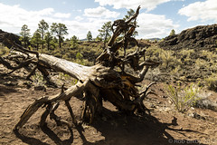 SedonaVacation_May2018-3268 (RobBixbyPhotography) Tags: arizona flagstaff sedona sunsetcrater vacation nationalmonument volcano travel