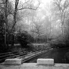 Have A Seat (michaelwalker19) Tags: clevelandmetroparks blackandwhite fog ethereal trees
