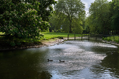 Velserbeek (Julysha) Tags: park bridge pond spring thenetherlands noordholland may 2018 velsen velserbeek ducks green acr d7200 nikkorafp1855