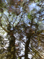 Dancing Wildly (andressolo) Tags: reflections reflection reflected reflect reflejos reflejo stream pool pond water trees abstracto abstract nature distortion distortions distorted