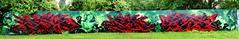 Artists: Baske ToBeTrue, Dias, Moter - Full pano (pharoahsax) Tags: graffiti karlsruhe ka pmbvw bw baden württemberg süden deutschland kunst art streetart street urban urbanart paint graff wall germany artist legal mural painter painting peinture spraycan spray writer writing artwork tag tags worldgetcolors world get colors baske dias moter