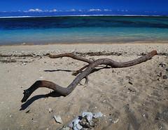 Rough shore (Robyn Hooz) Tags: reunion mare shore sabbia tronco corallo reef sassi stones line green indianocean view steps barefeet piedi nudi