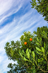 MONSTER (laura-melisande-gross90@web.de) Tags: monster orange green plants fruit canon ibiza