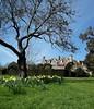 Hambleton Hall in spring (Dun.can) Tags: hambletonhall hambleton rutland trees daffodils yellow landscape spring