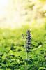 Forest flower (Miroslav91) Tags: forest bokeh light morning nikon 18105 d5100