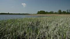 IMGP14128 (Łukasz Z.) Tags: lubelskie rzeczpospolitapolska poleskiparknarodowy nationalpark sigma1750mmf28exdchsm pentaxk3
