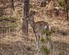 Hello Deer! (Chris Denny/dennyc69) Tags: landscapes grasslands woodland statepark casper deer outdoors