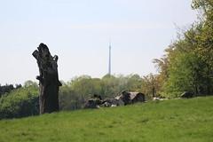 IMG_9134 (Lady Science) Tags: yorkshiresculpturepark