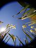 _B5A8714REWS In the Field, © Jon Perry, 19-4-18 zbj