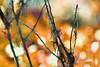 Twigs (Dreaming of the Sea) Tags: smileonsaturday bokeh nikond5500 trees stick nikkor18200mm catchthebokeh