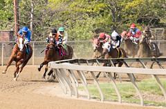 2018 Pimlico Race track (95) (maskirovka77) Tags: pimlico dirt mare race racehorse threeyearold turf yearling