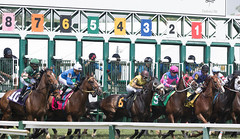 2018 Pimlico Race track (76) (maskirovka77) Tags: pimlico dirt mare race racehorse threeyearold turf yearling