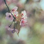 Life feels sweet when looking at spring blossoms thumbnail
