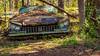 Economic Downturn (Wayne Stadler Photography) Tags: abandoned preserved junkyard georgia classic automotive derelict overgrown vehiclesrust rusty retro vintage oldcarcity rustographer rustography white