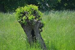 Vlaardingen Landje van Chardon (Hugo Sluimer) Tags: broekpolder vlaardingen zuidholland holland nederland natuur nature natuurfotografie natuurfotograaf naturephotography natuurinbloei
