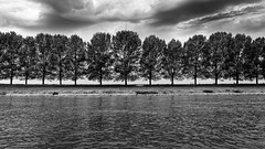 River, Oh River (Alfred Grupstra) Tags: blackandwhite nature tree landscape river outdoors scenics water lake forest nopeople sky summer ruralscene cloudsky nonurbanscene europe woodland tranquilscene