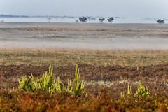 180520_008 (123_456) Tags: parkdehogeveluwe hoge veluwe nederland gelderland otterlo hoenderloo schaarsbergen