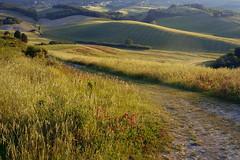 Campagna Toscana (Zz manipulation) Tags: art ambrosioni zzmanipulation paesaggio campagna erba natura fiori landscape strada cielo