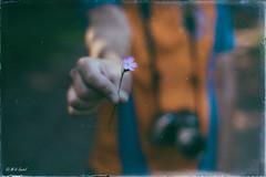 Quand le temps est en balade, il s'arrête pour faire une pause (M-Vi) Tags: fleur flower nature 50mm nikon d700 souvenir balade ardèche mai 2018