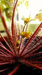 Plant life... (will668) Tags: plant leaf fronds furry spikey weed newlife newgrowth fauna plantlife hairy