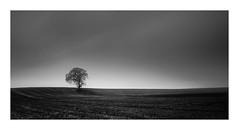 Rain stops play (Nick green2012) Tags: tree landscape illume ireland blackandwhite longexposure 21 silence