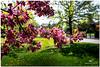 MAY 2018 NGM_7884_4526-1-222 (Nick and Karen Munroe) Tags: bloom blooming flowering flower flowers cherry cherryblossoms cherrytree cherryblossom blossoms blooms flowertown trees tree bokeh creamy macro closeup upclose spring karenandnick munroe karenmunroe karen landscape ontario outdoors brampton bramptonontario ontariocanada nikon nickandkaren nickandkarenmunroe karenick23 karenick karenandnickmunroe nature canada nick d750 nikond750 munroedesigns photography munroephotoghrpahy nickmunroe munroedesignsphotography munroephotography munroenick landscapes beauty brilliant nikon2470f28 2470 2470f28 nikon2470 nikonf28 f28