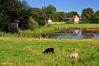 La campagne Normande (didier95) Tags: campagne cabourg normandie été mouton paysage etang reflet