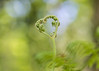 the wings of love (Emma Varley) Tags: forest love springtime fern heart bokeh blue green joy happiness leaves