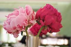 Milaan (wimrozenberg) Tags: httpswwwpasticceriamarchesicomithtml pioenroos bloem pioenrozen