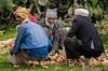 Tigray Men (Rod Waddington) Tags: africa african afrique afrika äthiopien ethiopia ethiopian ethnic etiopia ethnicity ethiopie etiopian tigray men fort rural farm group outdoor culture cultural