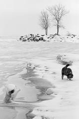 Ice Dog (peterkelly) Tags: bw digital canon 6d wheatley ontario canada northamerica lakeerie winter snow ice dog trees shoreline shore water