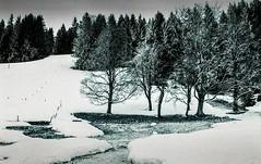 Combloux lomography turquoise 02 2018029 (Patrick.Raymond (4M views)) Tags: alpes haute savoie megeve comloux montagne neige froid gel bois arbre foret argentique nikon lomography turquoise