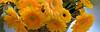 VSL (92) (Photopolox) Tags: flowers yellow nature nikon d4 photo photography digital picture best award fantastic excellent fantastique meilleur