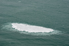 MS Westerdam - 7 Day Alaska May 2018 - Glacier Bay-282.jpg (Cindy Andrie) Tags: alaska hollandamerica d800 nature britishcolumbia beach victoriabc westerdam glacierbay landscape nikon cindyandrie canada andrie glaciers nikond800 cindy
