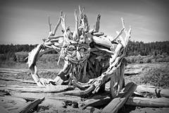 Driftwood Monster (CanMan90) Tags: logs sculpture beach esquimaltlagoon mothersday blackwhite victoria britishcolumbia vancouverisland cans2s canon rebelt3i