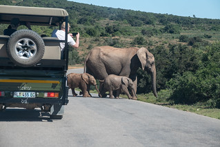 Young Elephant Fun at Addo