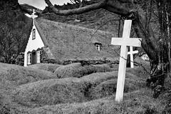 The turf church at Hof (trochford) Tags: church turf turfchurch graveyard cemetery mounds graves burialmounds cross tree hofskirkja hof öræfi southeasticeland iceland is bw bnw blackandwhite blackwhite noiretblanc blancoynegro mono monochrome canon canon6d ef24105mmf4lisusm ef24105