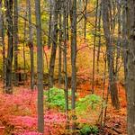 Season of Color thumbnail