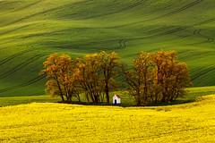 St. Barbara Chapel (Paweł Gałka) Tags: chapel moravia landscape landschaft rural grass hills green yellow sunset tree morawy dusk light shadows field rape paysage
