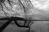 Drawsko (Alex von Sachse) Tags: drawsko czaplinek lake land westpommersche seenplatte poland monocrome blackandwhite fallen tree